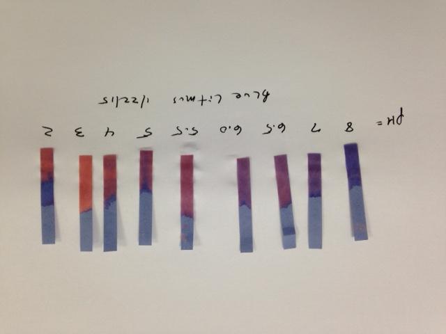 Blue Litmus Color Changes