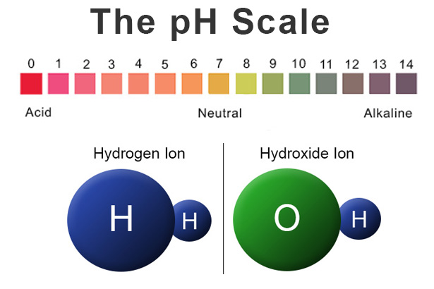 Back to Basics: Acids, Bases & the pH Scale - Precision Laboratories