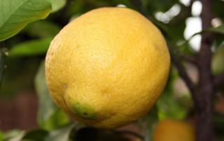do natural preservatives kill germs, dipslides, rose bengal agar