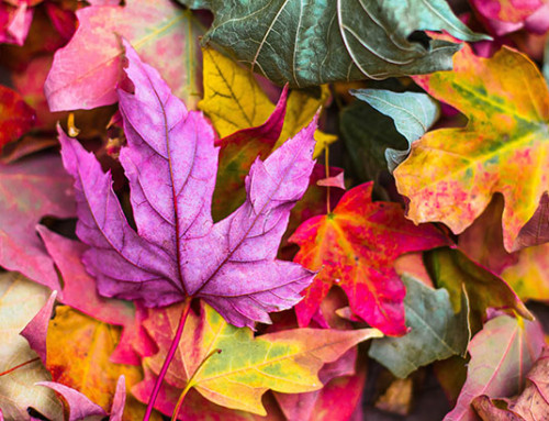 Fall Into Science: Leaf Chromatography Activity
