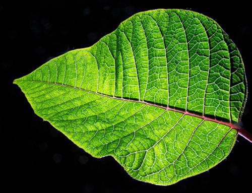 Spring Leaf Science Activity