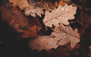 how does acid rain affect plant growth, acid rain, pH test strips, soil pH